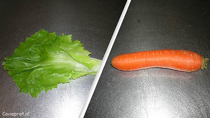 Cavia voeding: Andijvie en wortel voor je cavia!