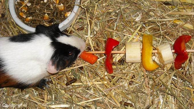 Cavia voeding: Groente en fruit stok voor je cavia!